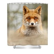 Fantastic Mr Fox Shower Curtain