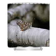 Farfalla Shower Curtain