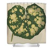 Farfugium Grande  Leopard Plant, Green Leopard Plant Shower Curtain