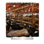Farm - Cow - Checking Out The Ladies Shower Curtain