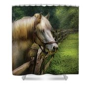Farm - Horse - White Stallion Shower Curtain
