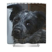 Farm Puppy  Shower Curtain