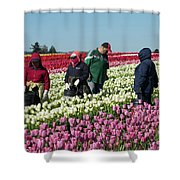 Farm Workers In Tulips Shower Curtain