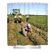 Farmer Inspects Peanut Field Shower Curtain