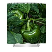 Farming Green Peppers Shower Curtain