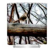 Fat Sparrow Fat Fence Shower Curtain