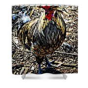 Fat Tuesday - Mardi Gras Chicken Shower Curtain