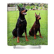 Father Amp Son Ultimo And Czar Shower Curtain