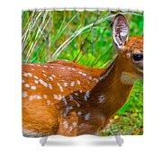 Fawn 4 Shower Curtain