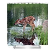 Fawn At The Water Hole Shower Curtain
