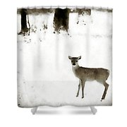 Fawn In The Snow Shower Curtain