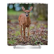 Fawn In Woods At Shiloh National Military Park Shower Curtain