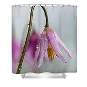 Fawn Lilies In The Rain Shower Curtain