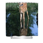 Fawn Reflection Shower Curtain