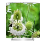 Feasting Bee Shower Curtain