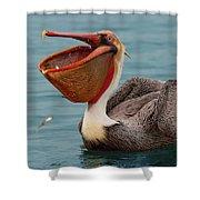 Feasting Brown Pelican  Shower Curtain