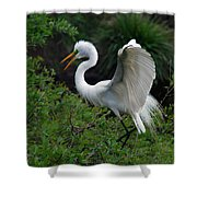 Feather 8-8 Shower Curtain