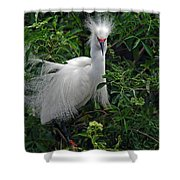 Feather 8-9 Shower Curtain