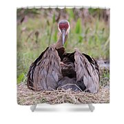 Feather Bed Shower Curtain