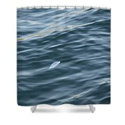Feather From Heaven Shower Curtain