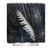 Feather In Burnt Tree Shower Curtain