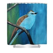 Feathered Friends Second In Series Shower Curtain