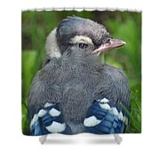 Feathered Jay Shower Curtain