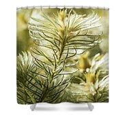 Featherheads Shower Curtain