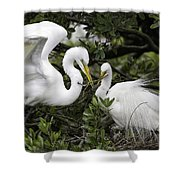 Feathering Their Nest Shower Curtain