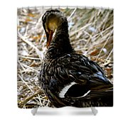 Feathers 2 Shower Curtain