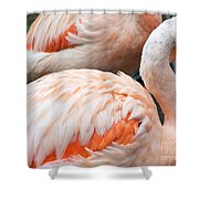 Feathers Of Flamingo Shower Curtain