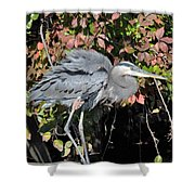 Feathers Ruffled Shower Curtain