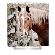February Horse Portrait Shower Curtain