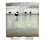 Plundering Plover Series 2 Shower Curtain