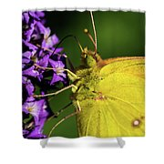 Feeding Butterfly Shower Curtain