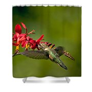 Feeding Hummer Shower Curtain