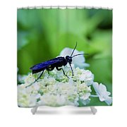 Feeding Insect Shower Curtain