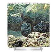 Feeding Sea Turtle Shower Curtain