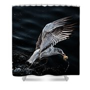 Feeding Seagull Shower Curtain