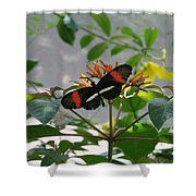 Feeding Time - Butterfly Shower Curtain
