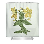 Feel-fetch - Hypericum Quartinianum Shower Curtain
