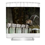 Feeling Squirrelly Shower Curtain