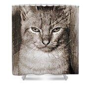 Feline Shower Curtain