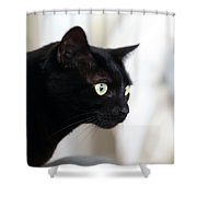 Feline On The Prowl Shower Curtain