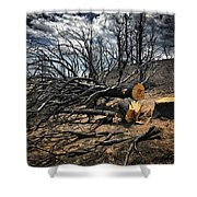 Felled After The Wildfire Shower Curtain