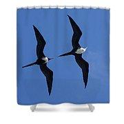 Female And Juvenile Magificent Frigatebird Fregata Magnificens 2 Shower Curtain