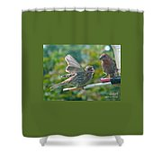Female And Male Crossbills    August  Indiana Shower Curtain