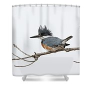Female Belted Kingfisher On A Cloudy Day Shower Curtain