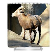 Female Bighorn Sheep Ewe Shower Curtain