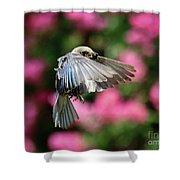 Female Bluebird In Flight Shower Curtain